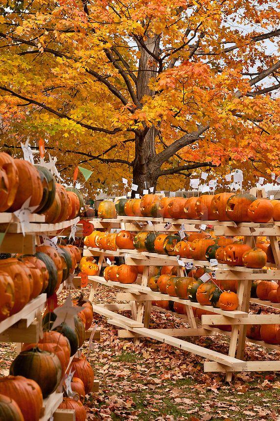 Pumpkin festival, Keene, Cheshire County, New Hampshire, NH, USA  NewHampshire Re,pinned b\u2026