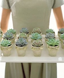 Succulent Cupcakes - these look to real to eat!!!!