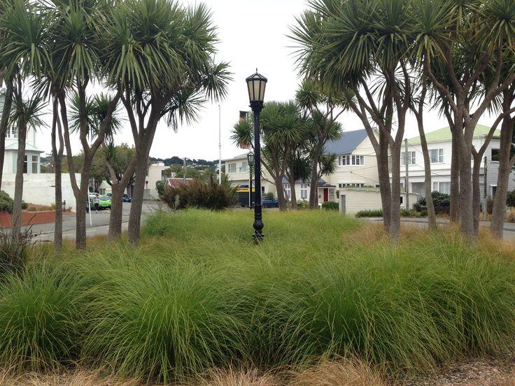 Cabbage tree, Carex secta planting, Kelburn, Wellington, NZ 2015