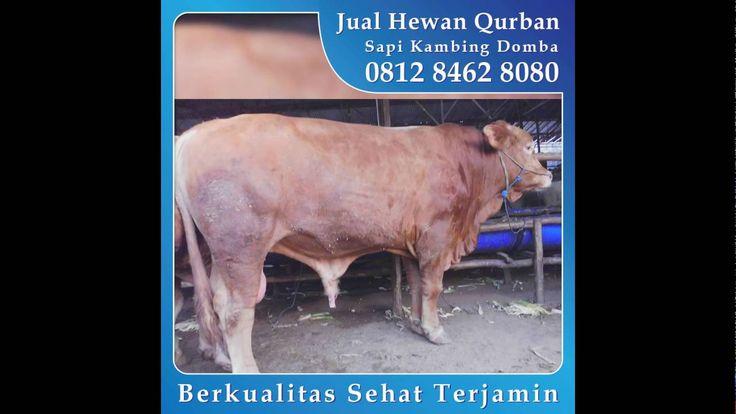 0812_8462_8080 (Tsel) Jual Hewan Qurban di Galaksi Pekayon Kayuringin Bekasi