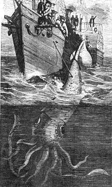 Riesenkalmar – Wikipedia