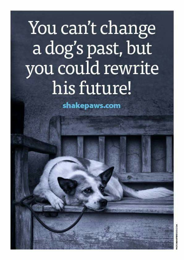 """You can't change a dog's past, but you could rewrite his future."" #adoptdontshop"