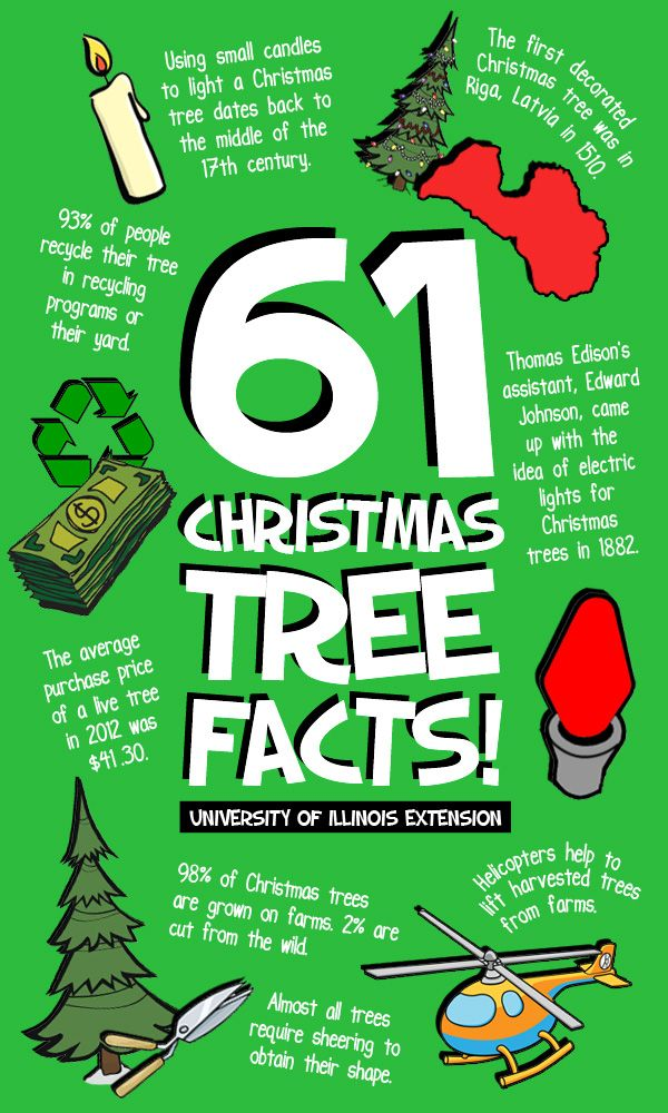 61 Fun Christmas Tree Facts for your amusement this holiday season!  Want more business from social media? zackswimsmm.tk
