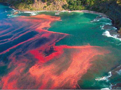a red tide in New Zealand, beautiful.