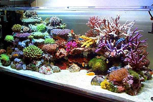 Google Image Result for http://2.bp.blogspot.com/_WMlufnmQlZk/TTnsSgg4eGI/AAAAAAAAAB4/MdYJnUzTmm4/s1600/Japan-Style-SPS-Reef-Tank.jpg