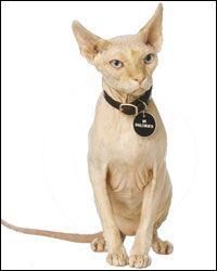 Mr Bigglesworth ~ Dr Evil's cat in Austin Powers.