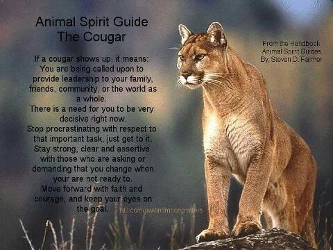 how to find out what spirit animal you have
