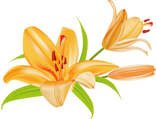 free clip art lily flowers - photo #2