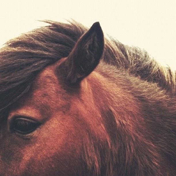 // annette pehrsson*: Dreams Horses, Beautiful Horses, Pretty Hors, Pehrsson Horses, Horses Ii, Animal Photography, Horses C, So Pretty, Pretty Pictures