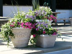 5 вариантов оформления композиций в контейнерах.  Балконные ящики, контейнеры и каменные цветочницы предлагают украсить сад не просто горшечными растениями. Большой объем емкостей позволяет создавать сложные композиции из нескольких растений, своеобразные мини-клумбы переносного формата.