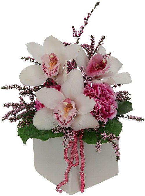 cubed orchids                                                                                                                                                                                 Mais