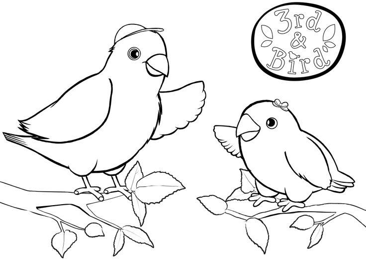Mejores 21 imágenes de 3rd & Bird en Pinterest | Actividades, Aves y ...