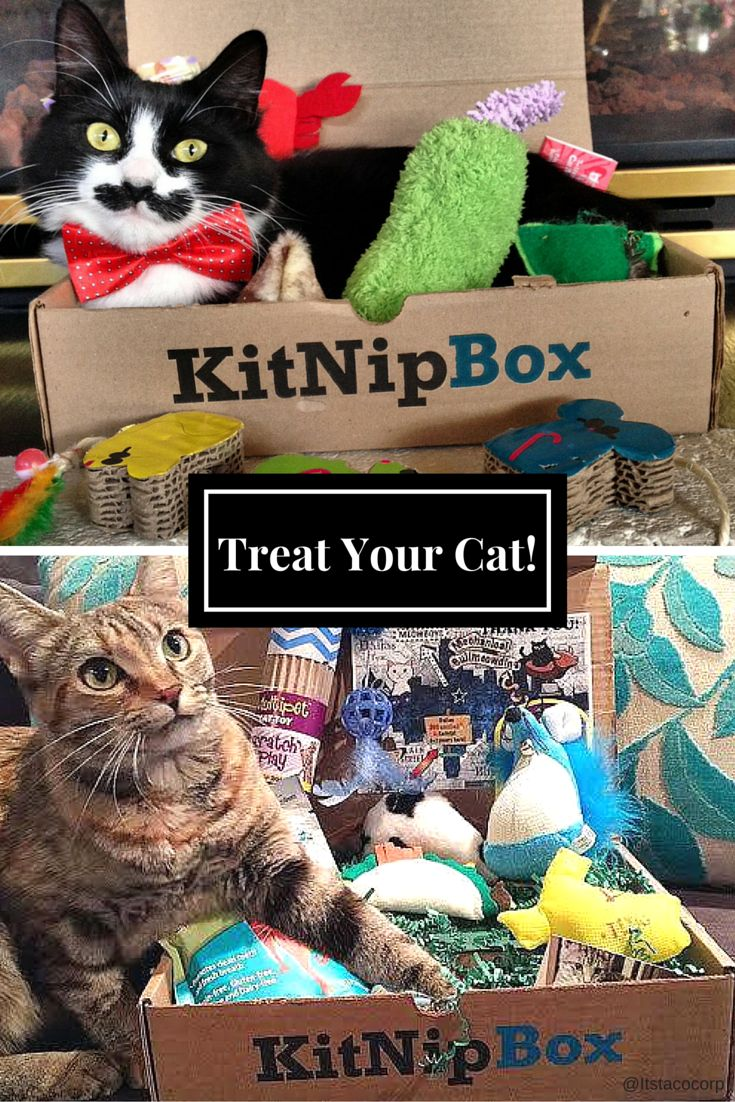 Order a box of goodies for your cat today at —> https://www.kitnipbox.com/?utm_source=pinterest&utm_medium=cpc&utm_content=muppet_taco-2im-text&utm_campaign=muppet_taco-USUK-IOSDT and treat your kitty to toys, treats, and other wholesome products. Your purchase will also help us support #cats in need!