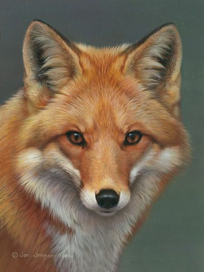 Drawing of a red fox, fantastic!