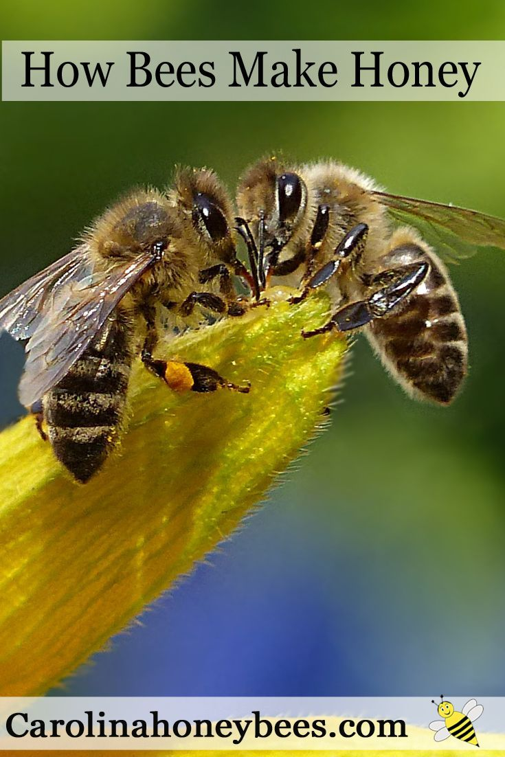 how to get honey from bees
