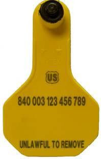Ytex 840 USDA Official Visual Small Blank Ear Tag with Button