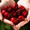 Annual Cherry Festival
