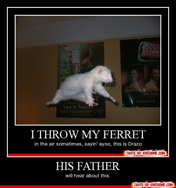 he is such a twitchy little ferret.....oh how i love harry potter humor!