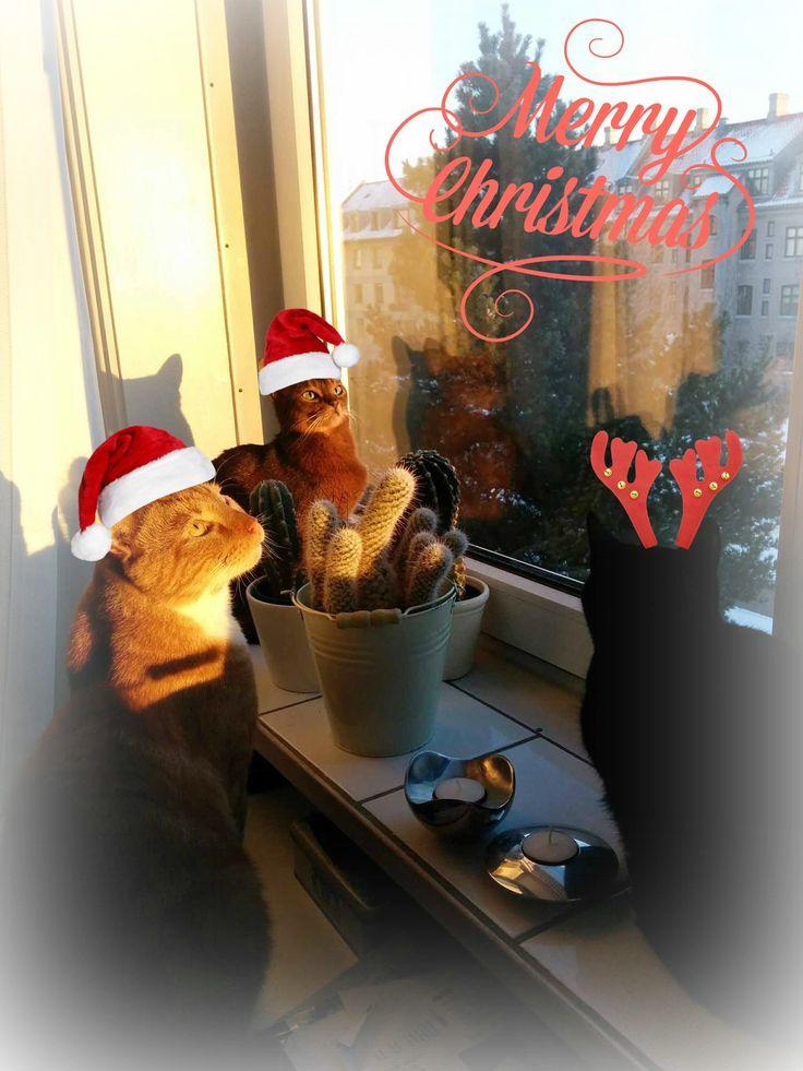 Glædelig jul - Merry Christmas!