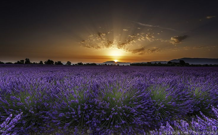 Sunrise at Plateau de Valensole, France