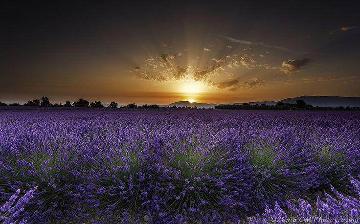 Sunrise at Plateau de Valensole, France