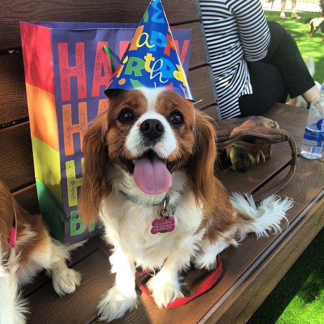... birthday. on Pinterest  Happy dogs, Birthday cakes and Cat birthday