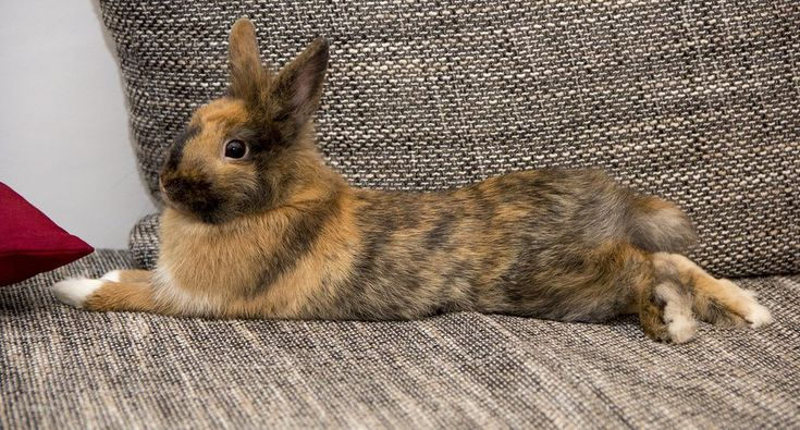 Rabbit Binkies: Your Bunny Is Jumping from Pure Joy http://www.wideopenpets.com/when-a-rabbit-binkies-they-do-it-from-pure-joy/