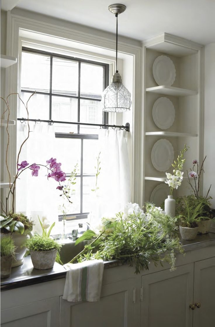 great kitchen window sunlight for growing plants & flowers