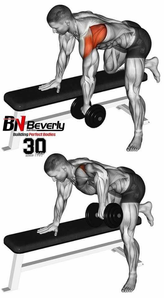 Single Arm Dumbbell Row Back Muscles Exercise