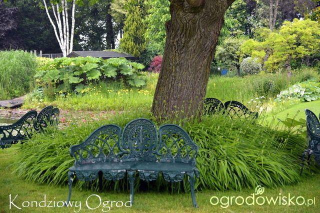 Ogrody Wodne Ady Hofman - Vijvertuin Ada Hofman - strona 2 - Forum ogrodnicze - Ogrodowisko