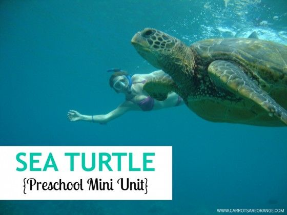 Sea turtle mini unit with tons of free printables and book suggestions