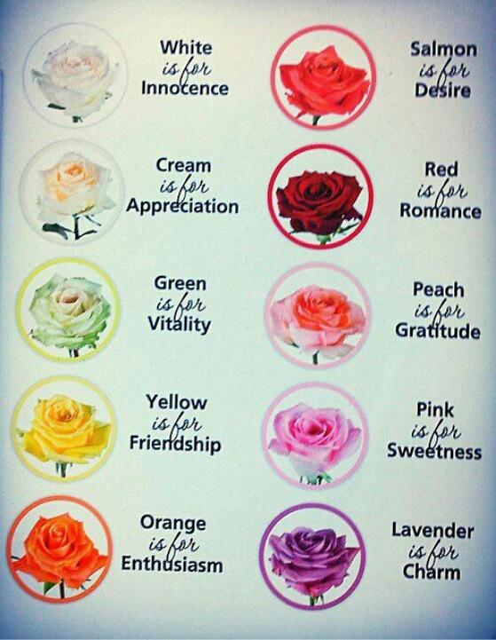 Roses... Rose color meanings, Birth month flowers