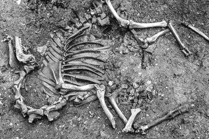 Скелет в шкафу, или сайт за 200 долларов