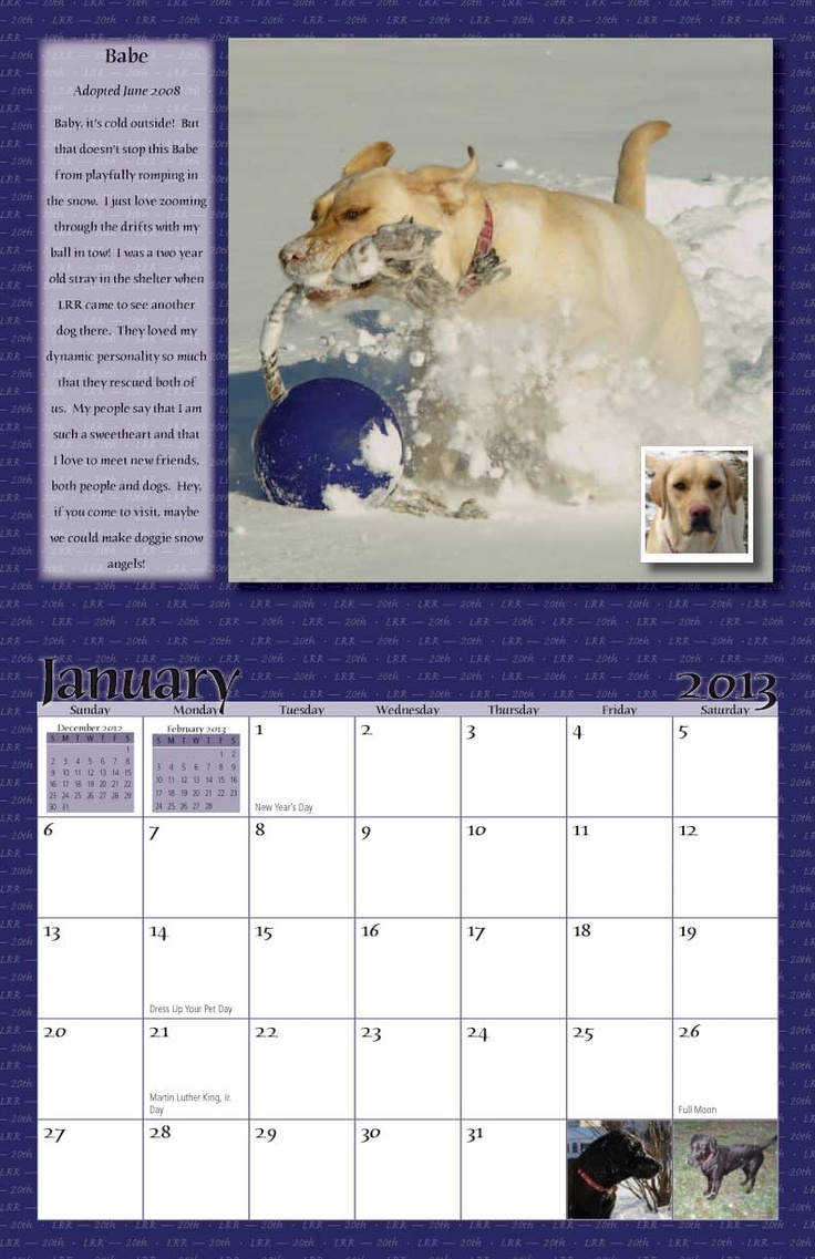 Dog Calendar Ideas : Best ideas about dog rescue calendars on pinterest