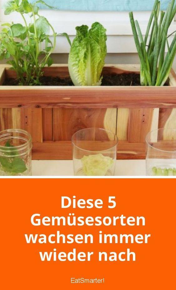 Gemüse, dass man einmal kaufen muss, und das immer wieder nachwächst | eatsmarter.de