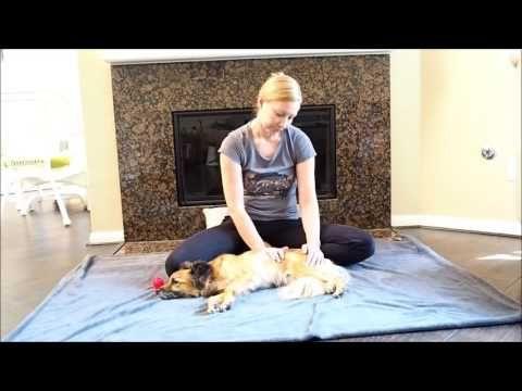 Neuer Blog-Artikel: Massage für Tiere - tierheilpraxis-blogs Webseite!