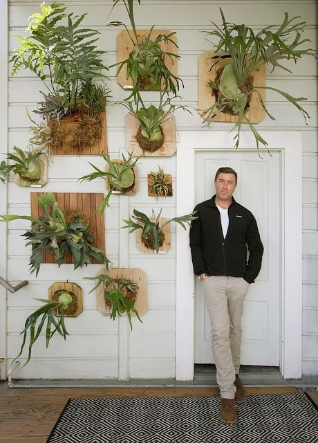 Staghorn Fern wall collection