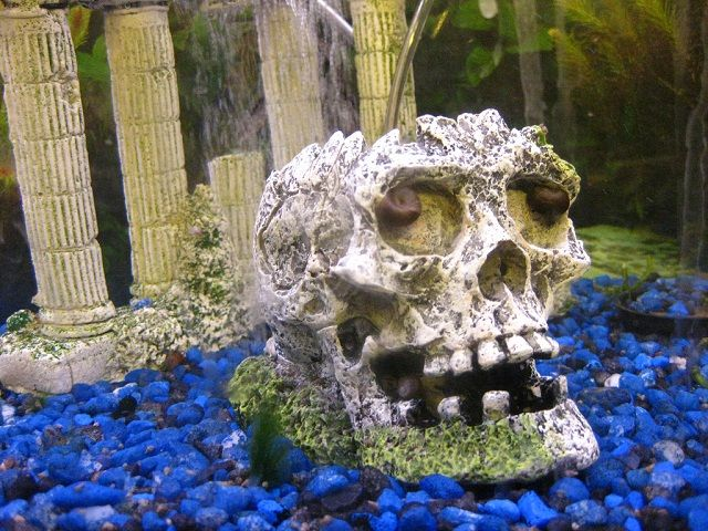 11 best fishies images on Pinterest Funny animals, Gone fishing - halloween fish tank decorations