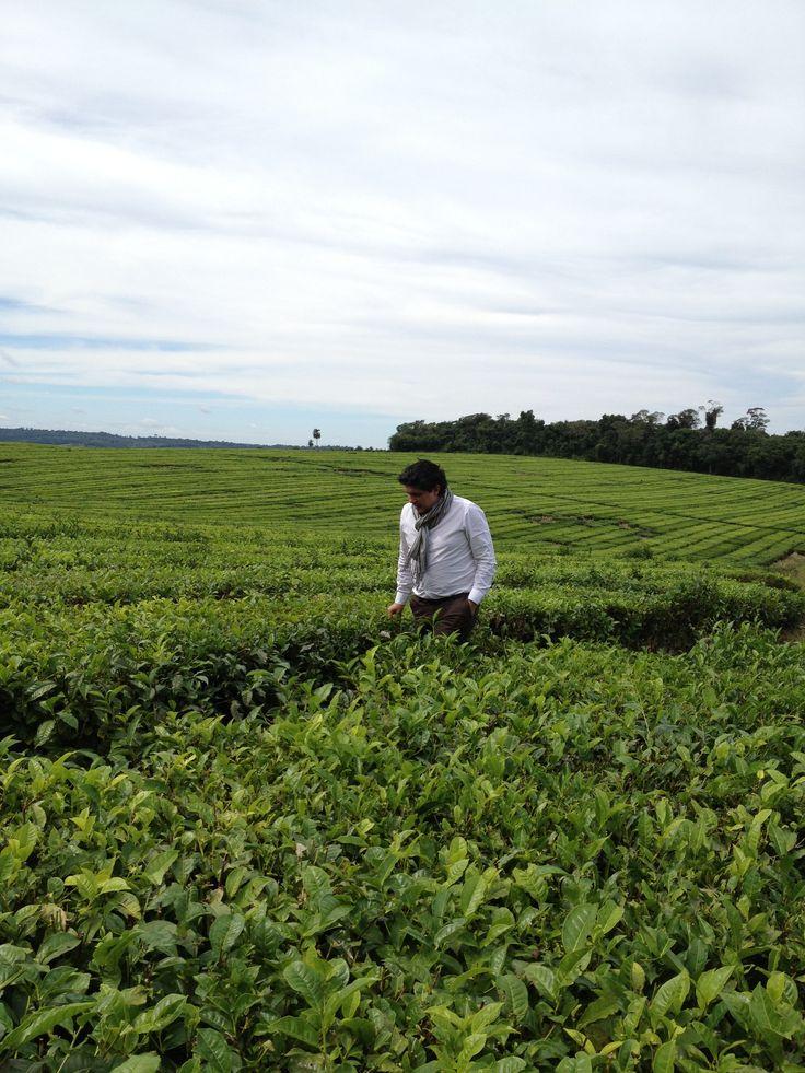 Guillaume LELEU en visite dans les plantations de Misiones, Argentine Photographie : Theodor Uruguay