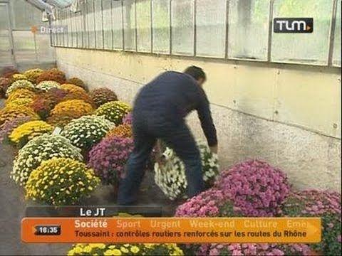 Le chrysanthème, fleur de la Toussaint - YouTube