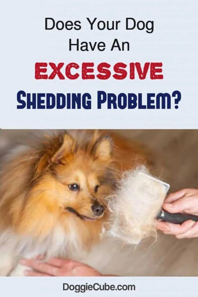 Dog Training Name Your Dog Has Been Shedding Too Much Hair In The