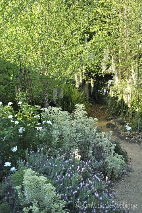 Tropical birch woodland walk at The Laurels  www.clintkenny.com.au