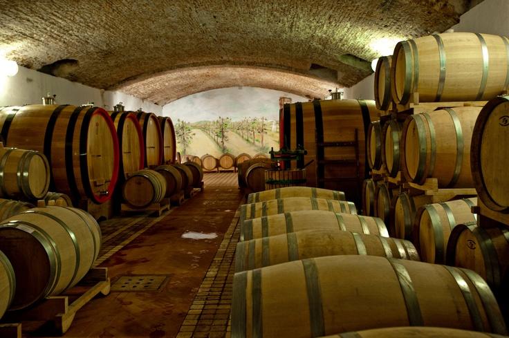 Cellar, Friuli Venezia Giulia