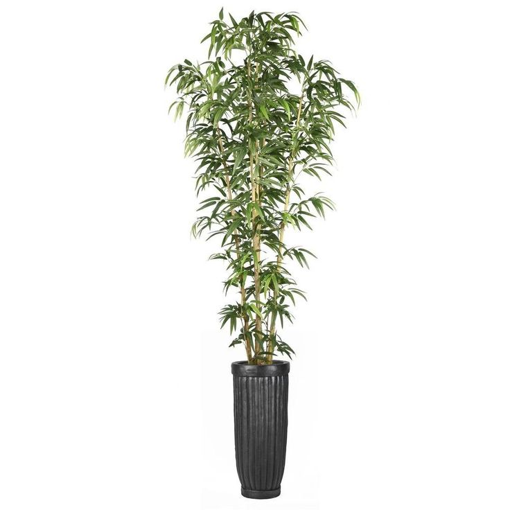 93 in bamboo tree in natural poles in planter vhx116218