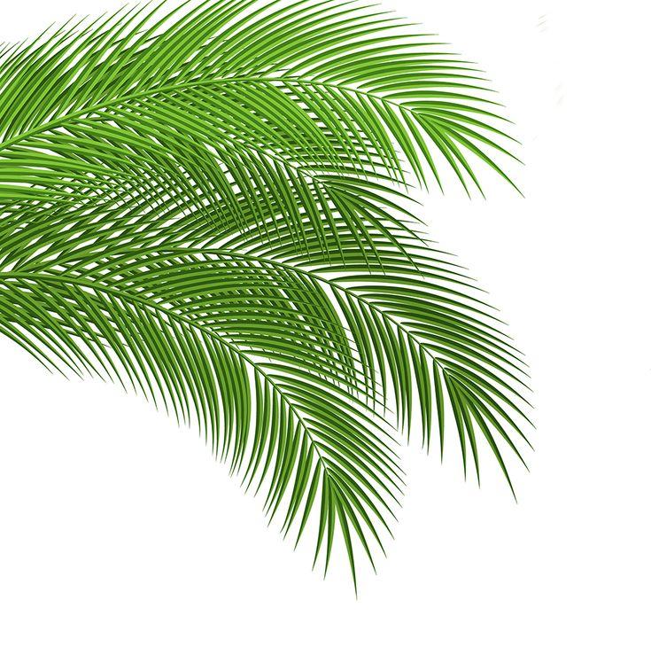 Уроки Adobe Illustrator. Урок 18. Ветка пальмы.