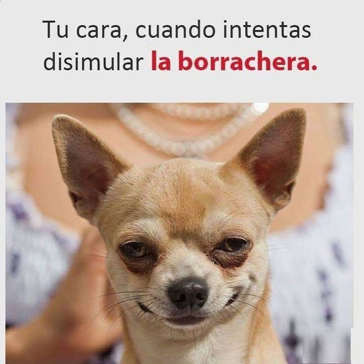 jajajaja en vez de la cara de borrachera es una cara de zadico #bromasgraciosas