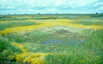 meadow Vernal pool (USFWS).