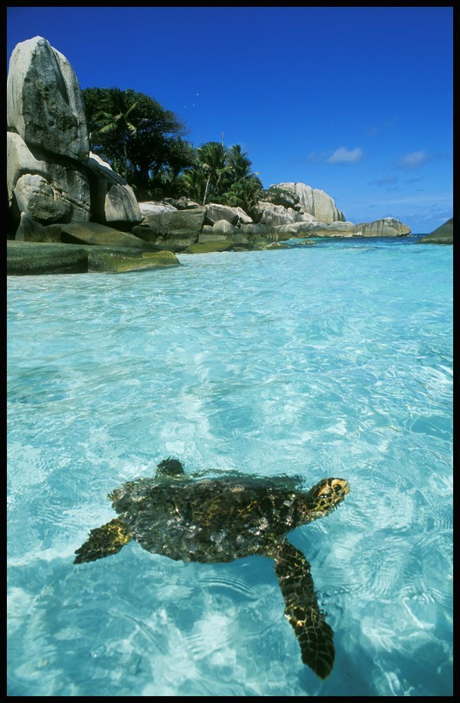 The water is so clear and beautiful. Imagine being in Cocos Island, Costa Rica swimming with fish and turtles