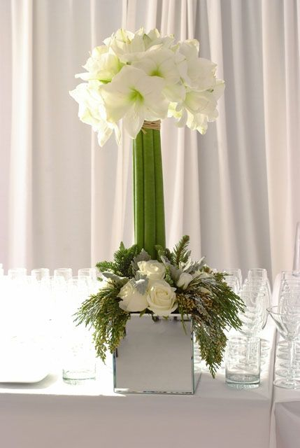 Amaryllis topiary corporate flowers corporate flower for Amaryllis christmas decoration