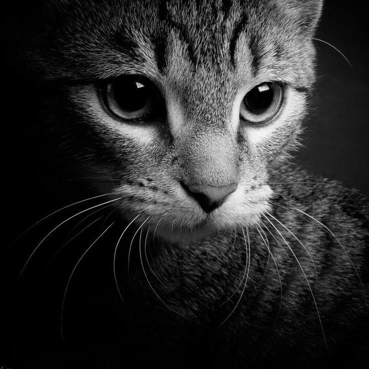 cat by Antje Braun on 500px